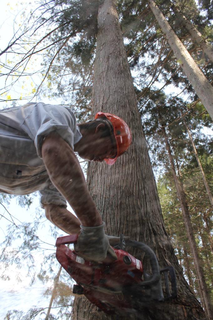 飛騨五木,井上工務店,林業,伐採