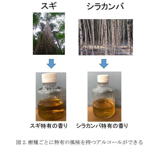 木のお酒の研究内容