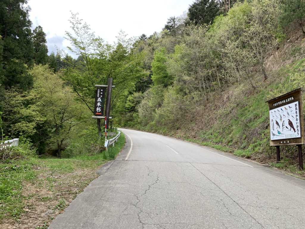 千光寺の五本杉の看板