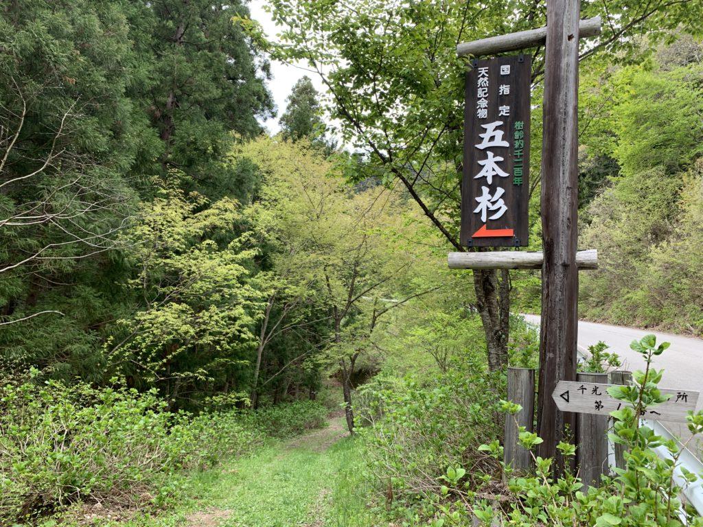 千光寺の五本杉への遊歩道