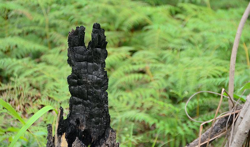 オランウータンの森の再生プロジェクト