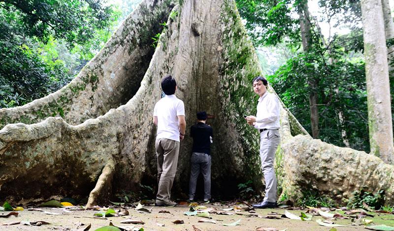 オランウータンの森再生プロジェクト