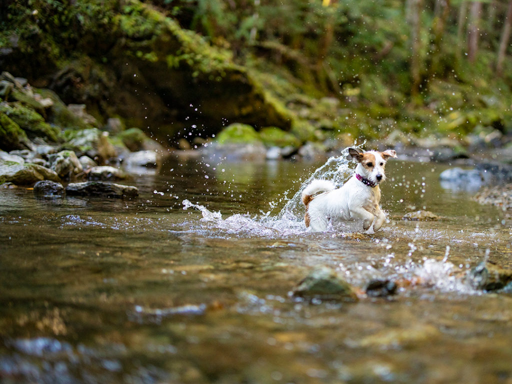 犬と川遊び