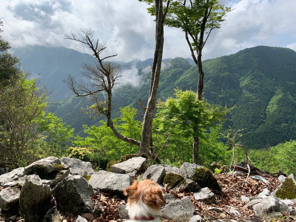 愛犬と尾根トレッキング
