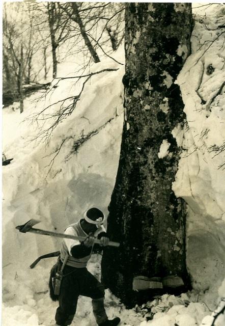 斧での伐採の様子(林野庁中部森林管理局所蔵)