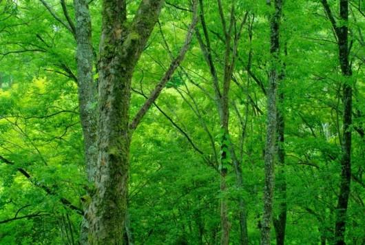 森林浴でリラックス 科学で証明された効果とは