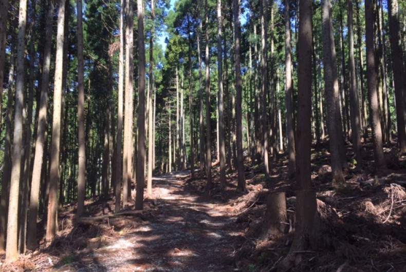 都 道府県 割合 森林