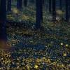 森のホタル~森の中の電飾~