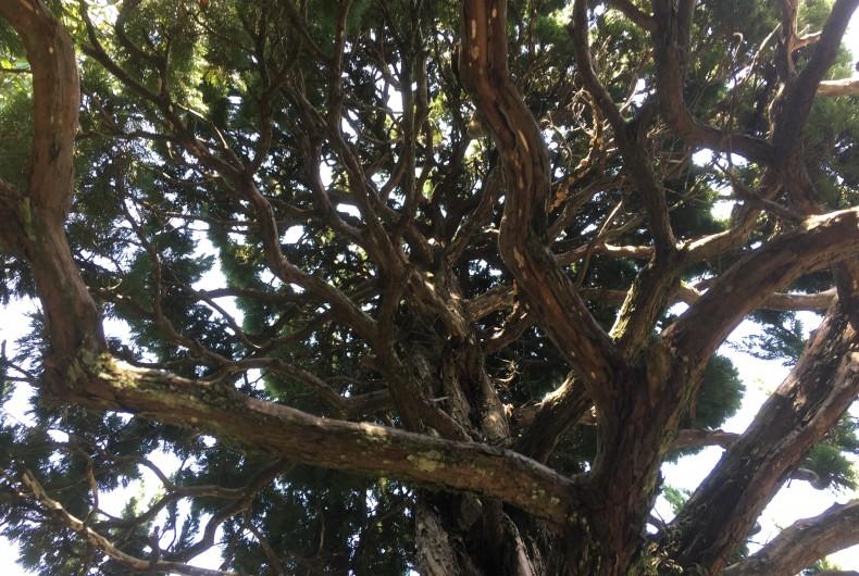 まるで炎?不思議な形の樹木の秘密