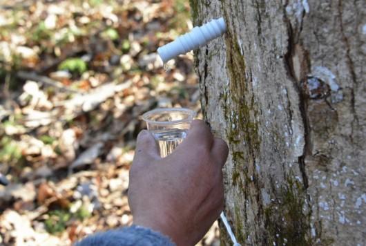 伐らない林業? 秩父の森を生かす2つの樹