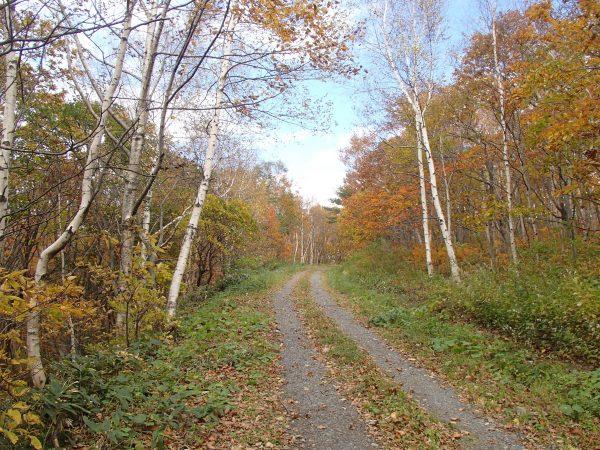 秋の岩泉町の森林