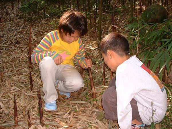 800四方竹狩り子供 のコピー