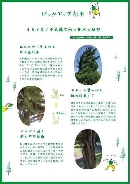 カイヅカイブキ,記事,樹形,不思議,秘密